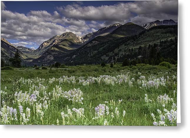 Endo-valley Meadow  Greeting Card by Tom Wilbert