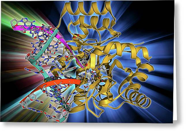 Endonuclease Iv Molecule Greeting Card by Laguna Design