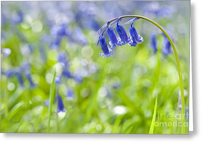 English Bluebell Greeting Card by Jacky Parker