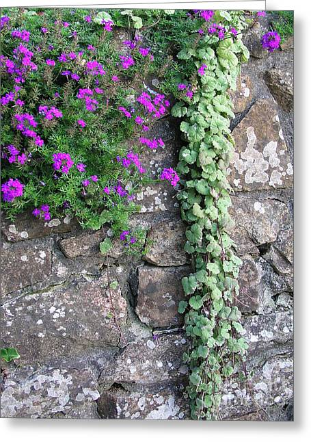English Garden Wall Greeting Card by Bev Conover