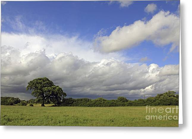 English Oak Under Stormy Skies Greeting Card