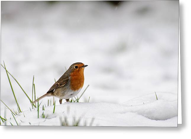 English Robin Greeting Card by Ivelin Donchev