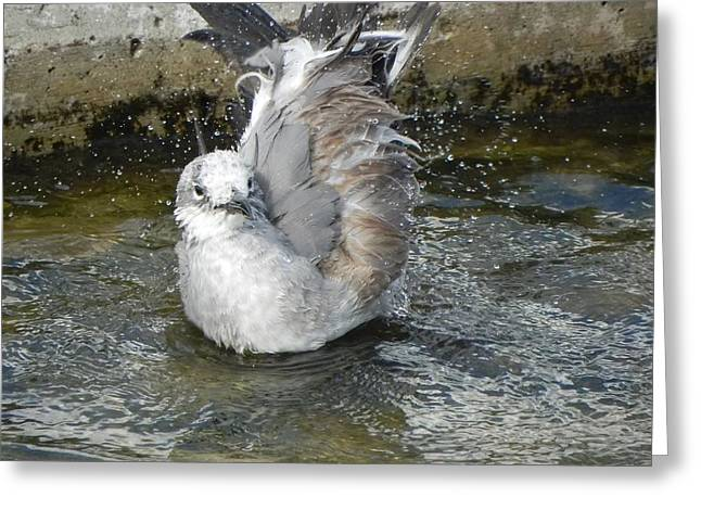 Enjoying A Puddle Greeting Card by Cynthia N Couch