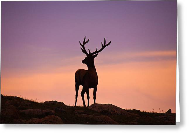 Enjoying The View Greeting Card by Darren  White