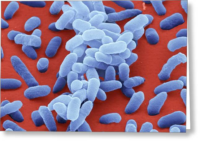 Enterobacter Cloacae Bacteria Greeting Card by Juergen Berger