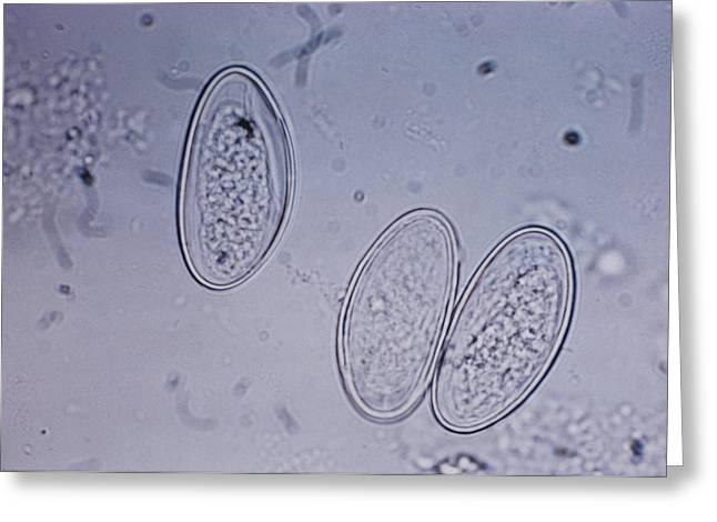 Enterobius Vermicularis Greeting Card