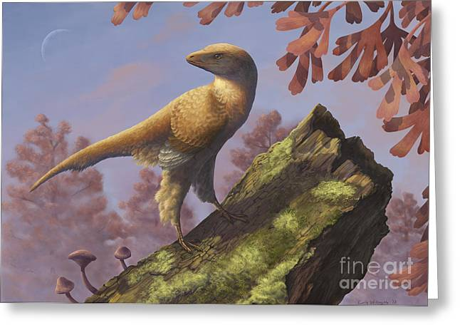 Eosinopteryx Brevipenna Perched Greeting Card by Emily Willoughby