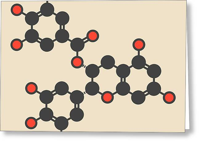 Epigallocatechin Gallate Molecule Greeting Card