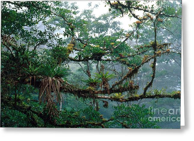 Epiphytes Greeting Card by Gregory G. Dimijian, M.D.