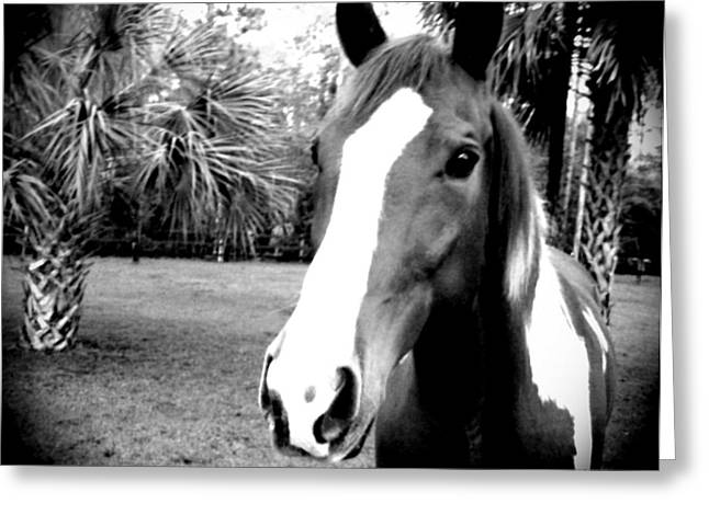 Equine Beauty Greeting Card by Chasity Johnson
