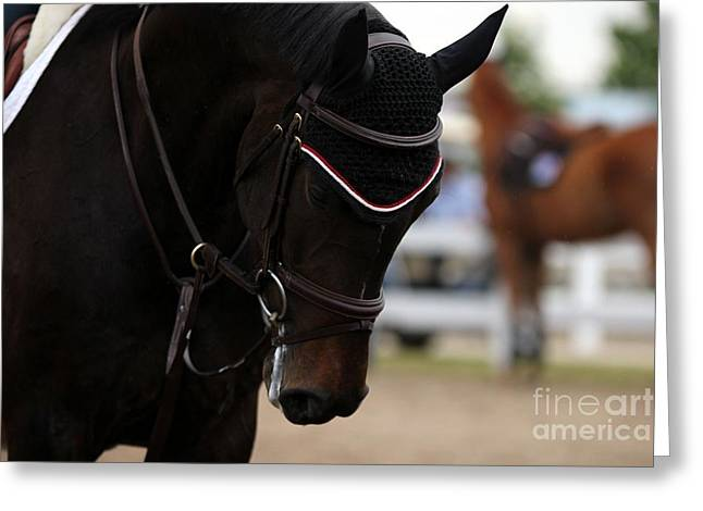 Equine Concentration Greeting Card