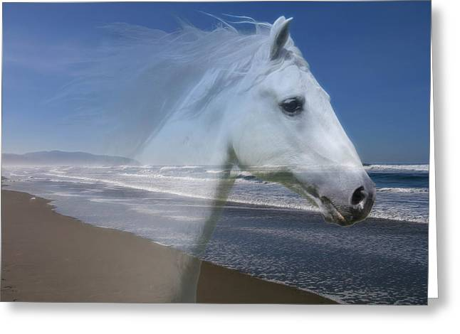 Equine Shores Greeting Card