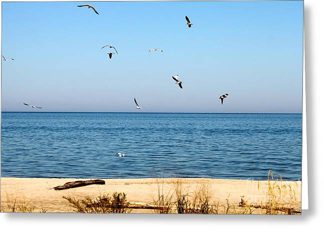 Erie Birds And Beach Greeting Card by Jay Nodianos