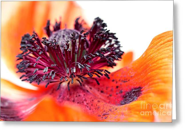 Eruption Of Colors Greeting Card