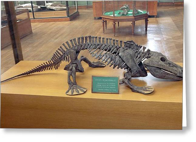 Eryops Skeleton Greeting Card by Pascal Goetgheluck/science Photo Library
