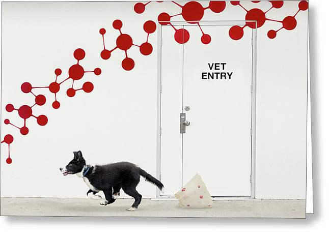 Escape At The Vet Greeting Card