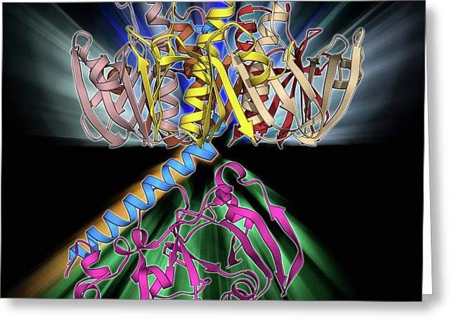 Escherichia Coli Heat-labile Enterotoxin Greeting Card by Laguna Design