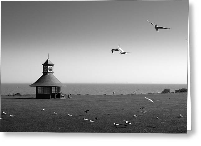 Esplended Gulls Greeting Card