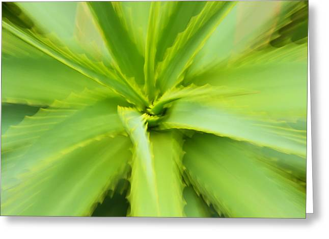 Essence Of Aloe Greeting Card by Rachel Cohen