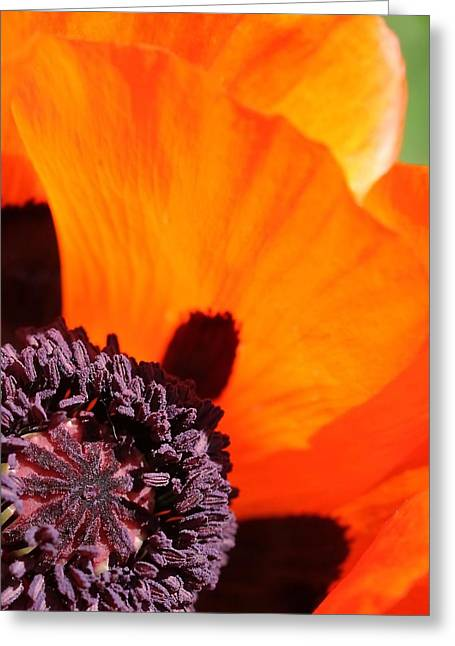 Essence Of Poppy Greeting Card by  Andrea Lazar