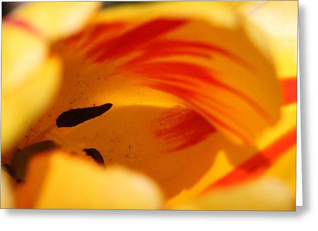Essence Of Tulip Greeting Card by  Andrea Lazar