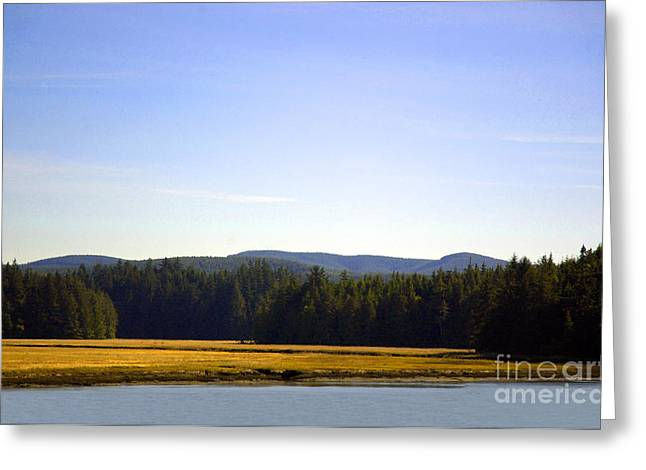 Estuary Near Nemah Greeting Card