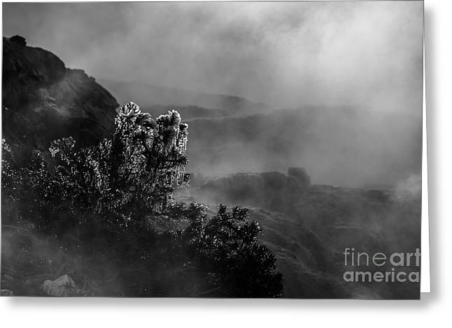 Ethereal Beauty In Black And White Greeting Card