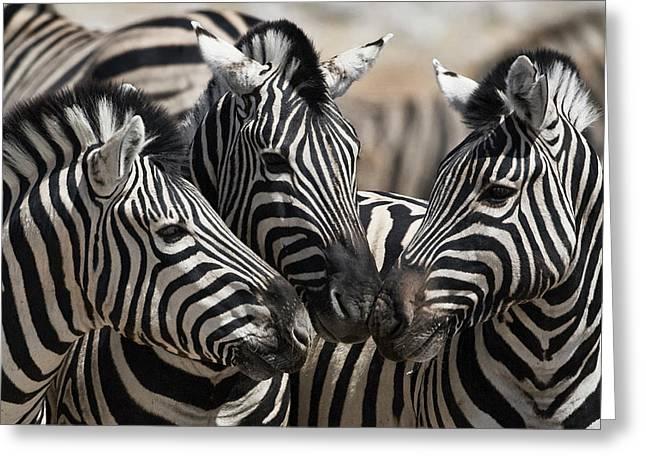Etosha National Park Greeting Card by Janet Muir