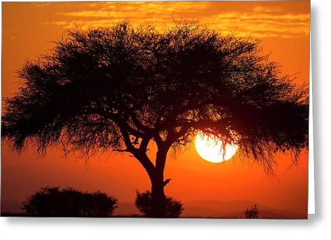Etosha National Park, West Entrance Greeting Card by Janet Muir