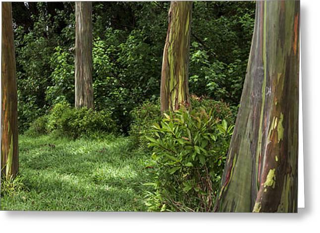 Eucalyptus Dream Greeting Card
