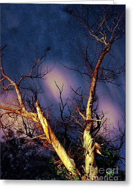 Eucalyptus Night Tree Greeting Card by Petros Yiannakas