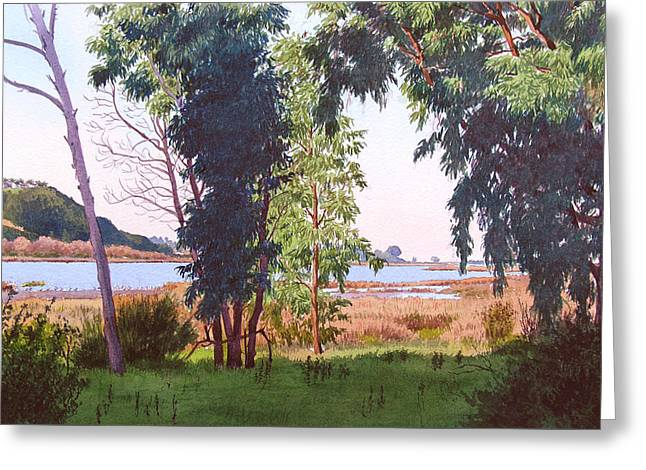 Eucalyptus Trees At Batiquitos Lagoon Greeting Card by Mary Helmreich