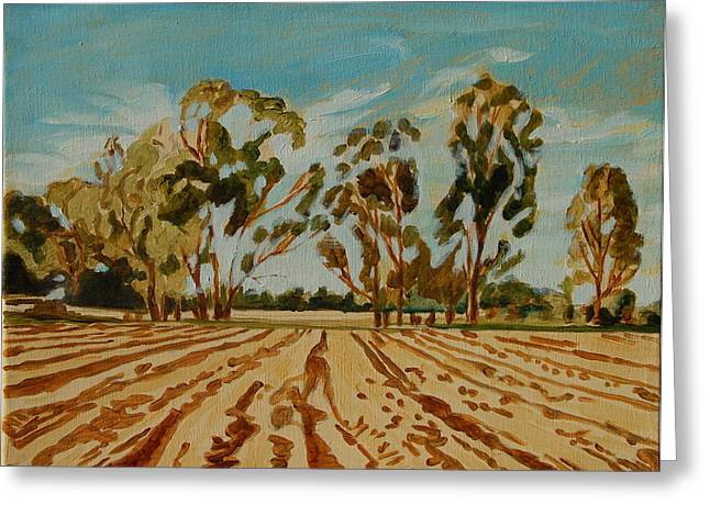 Eucalypus Trees Near Bloemfontein Greeting Card