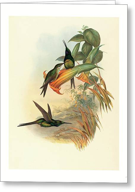 Eugenia Imperatrix Empress Hummingbird Greeting Card
