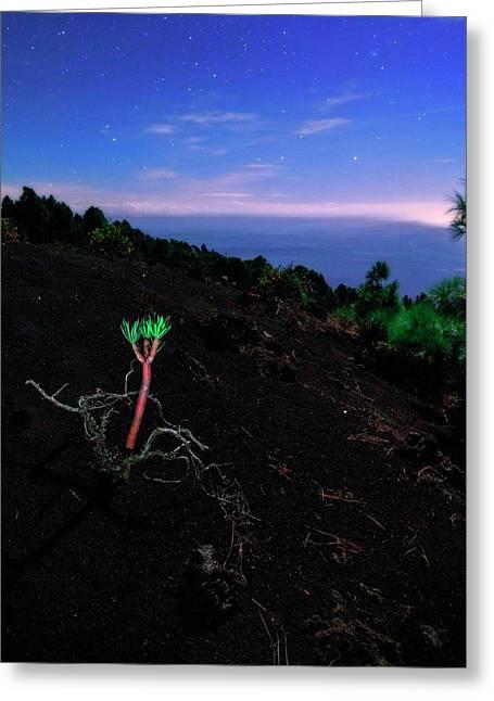 Euphorbia Balsamifera Under Night Sky Greeting Card by Babak Tafreshi