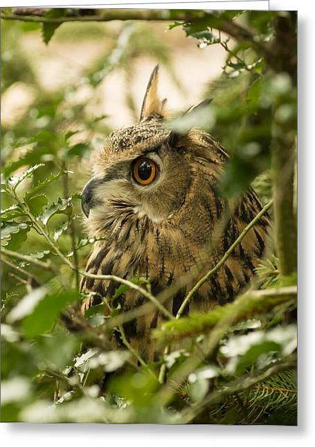 Eurasian Eagle-owl 2 Greeting Card
