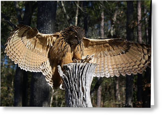 Eurasian Eagle Owl Coveting His Prey Greeting Card by Paulette Thomas