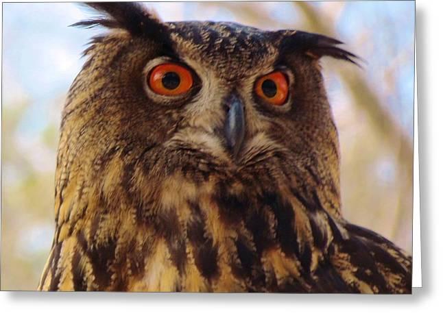 Eurasian Eagle Owl Greeting Card by Cynthia Guinn