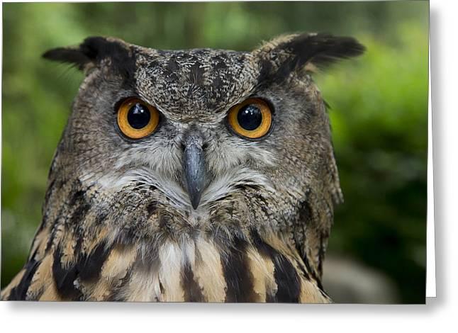 Eurasian Eagle-owl Greeting Card by San Diego Zoo