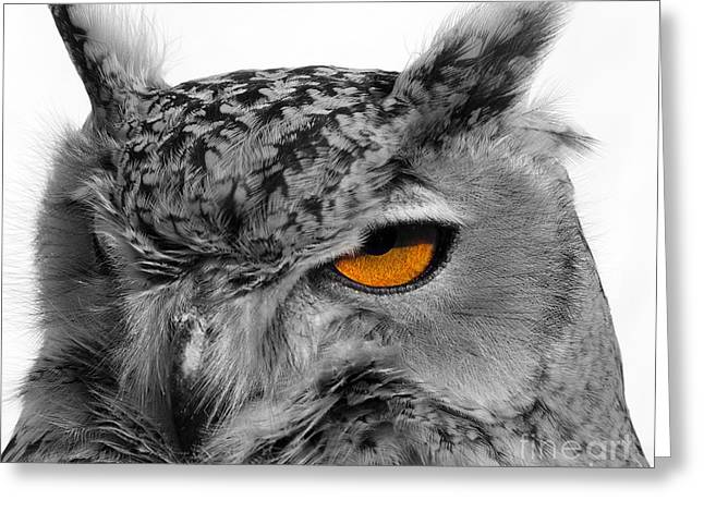 Eurasian Eagle Owl Greeting Card by Skip Willits