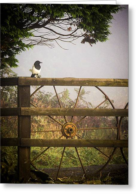 Eurasian Magpie In Morning Mist Greeting Card