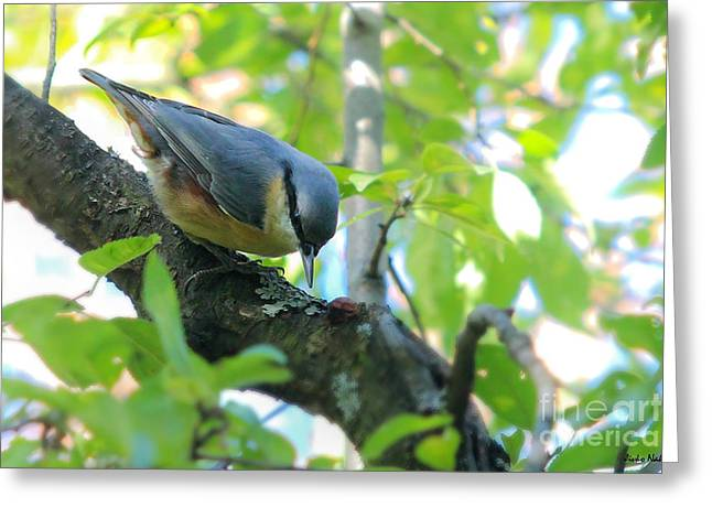 Eurasian Nuthatch - Sitta Europaea Greeting Card by Jivko Nakev