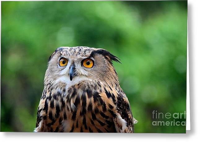 Eurasian Or European Eagle Owl Bubo Bubo Stares Intently Greeting Card