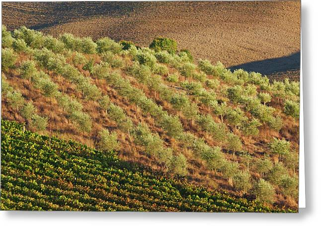 Europe, Italy, Tuscany, Vineyard Greeting Card by Terry Eggers