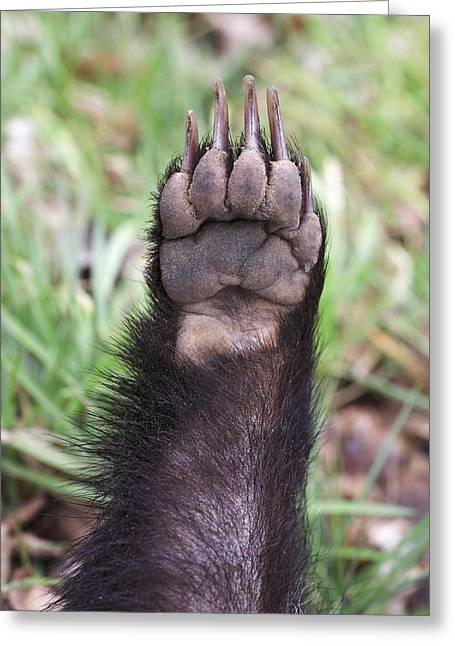 European Badger Paw Greeting Card by Duncan Usher