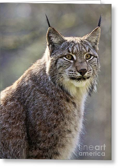 European Lynx Greeting Card