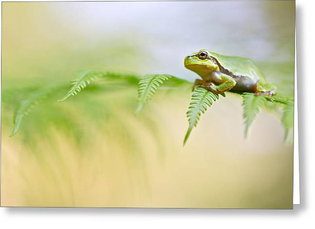 European Tree Frog Greeting Card by Dirk Ercken