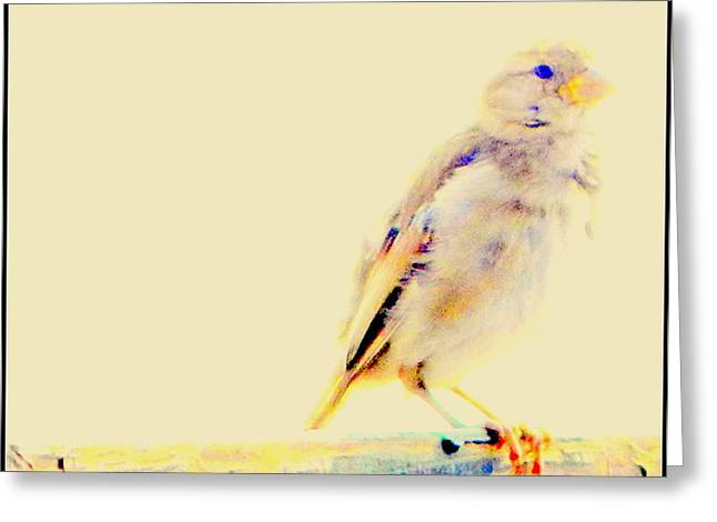 Even Sparrows Matter Greeting Card by Kathy Barney
