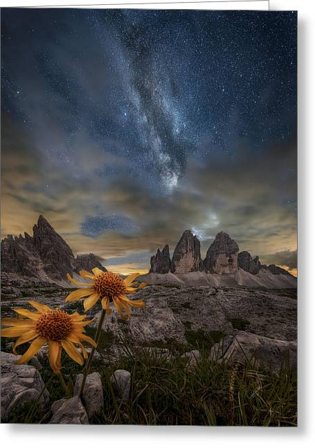Even The Flowers Seem To Be Fascinated By The Stars Greeting Card