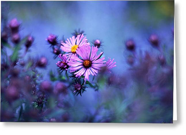 Evening Asters Greeting Card by Jessica Jenney